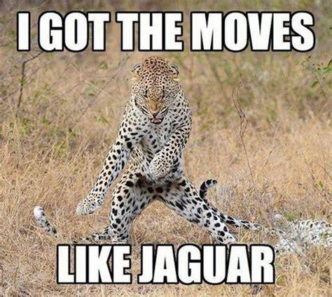 I Got The Moves Like Jaguar Funny Animal Dance Image