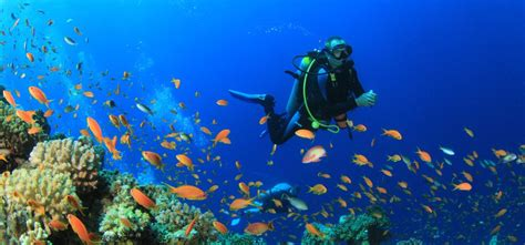 How Scuba Diving Can Make You Feel Great