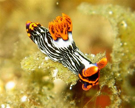 The Best Macro Diving in the World Top 10 Spots