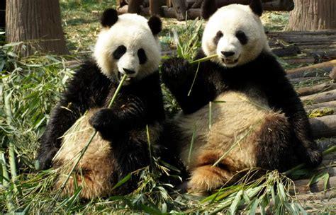 Endangered species Threatened species ESL Resources
