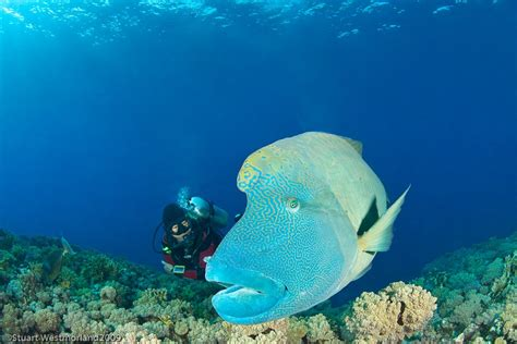 Egypt Diving Information Scuba Diving Resource