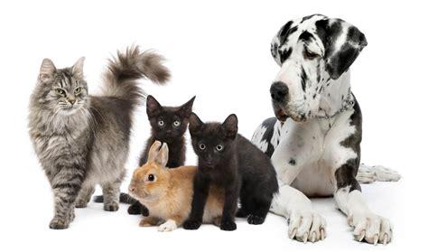 Animal Logistics Travel Cargo ulkomaanmuutto, muutto ulkomaille