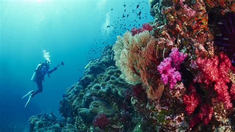 Best Dive Sites of Thailand plus Myanmar and Indonesia