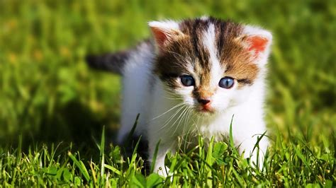 Baby Animal Wallpaper HD Images One HD Wallpaper