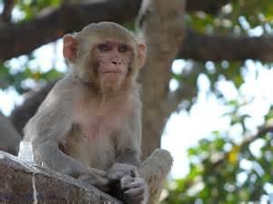 Photo: Monkey on the Wall Enjoying India