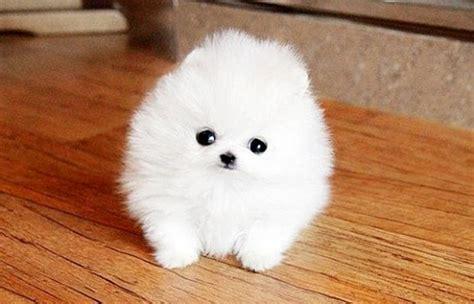Cutest Dog Breed