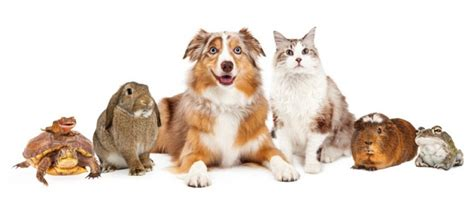 3 Tips for Moving With Your Pets