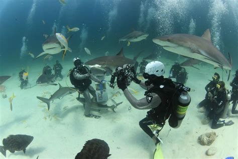Two Tank Shark Dive Island Routes