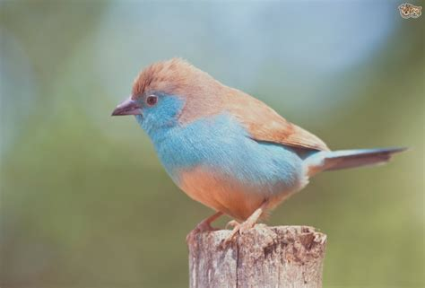 Attending Types Of Pet Birds Finches Can Be A Disaster If