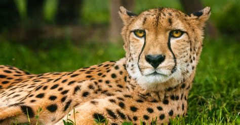 Endangered Species Act CFAES