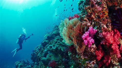 Similan Islands Dive Sites The Best Diving in Thailand