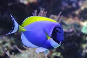 Sealife, Blue, Aquarium Aquariumfish, Aquarium Fish Saltwater, Saltwater Fish, Tropical Fish, Animal