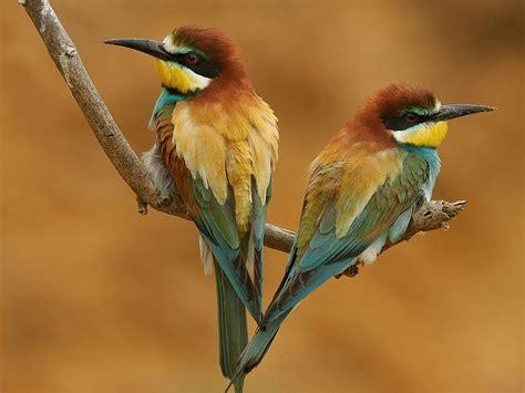 wallpapers: Birds Desktop Wallpapers