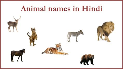 Animal Names in Hindi YouTube