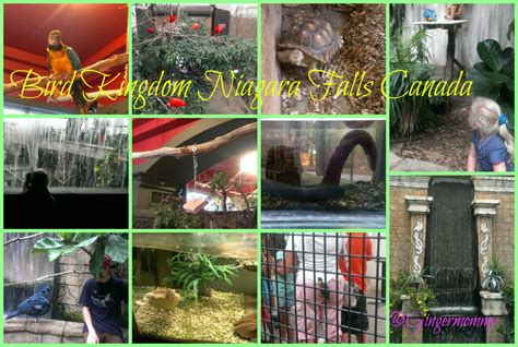 Bird Kingdom Niagara Falls Canada Tales of a Ranting Ginger