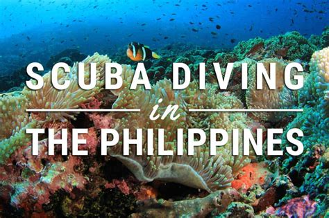 The Best Places To Go Diving In The Philippines DIVEin