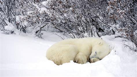 Download Snow Animals Wallpaper 1920x1080 Wallpoper #426624