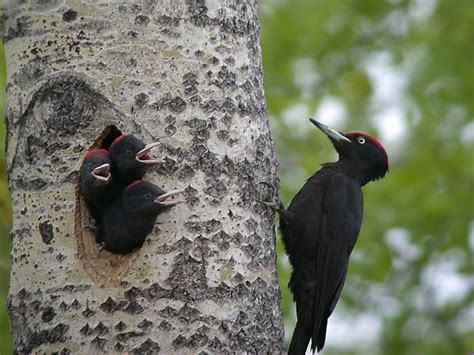 ABCs of Animal World: Type of Nests of Different Bird Species