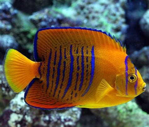 The Worlds Most Expensive Tropical Fish Wow Amazing