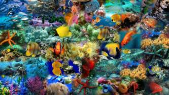 Animals Fishes Colorful Fish Bestepics Litle Pups