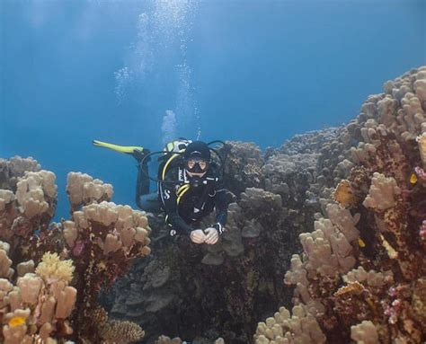 Best Dive Sites in Dahab, Egypt Scuba Diving Website for
