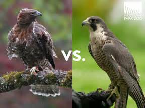Osprey  the ultimate fisher  YouTube