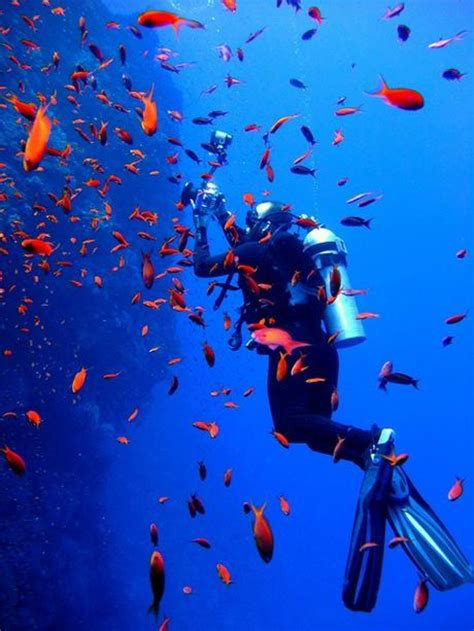 Introduction to Scuba Diving Red Sea, Egypt Paperblog