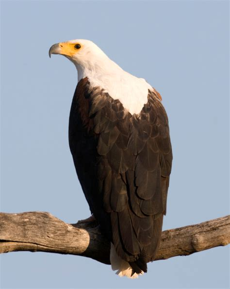 Typical bird species on your African safari Africa Freak