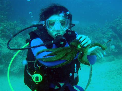Hawaii Scuba Diving Sites, Dive Locations