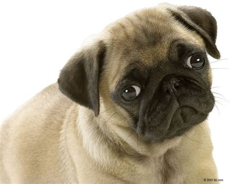 Animals Zoo Park: 8 Cute Puppies Wallpapers, Cute Puppy