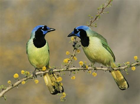 worldimage4u: Colorful and different types of Birds for