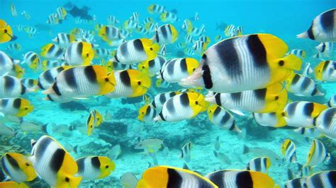 Tropical Fish Backgrounds Wallpaper Cave