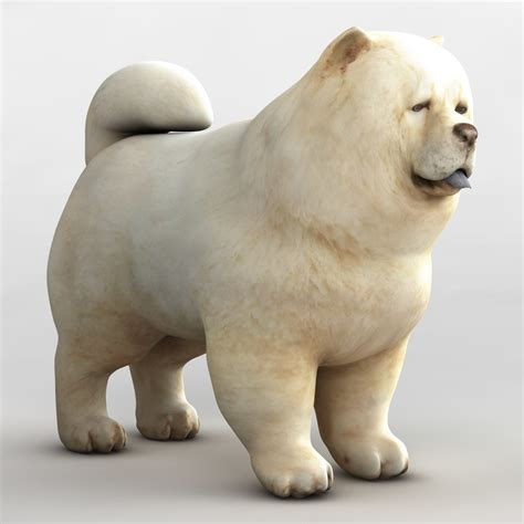 chow dog 3d max