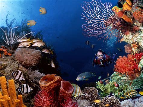 Sea Life images Marine Life wallpaper photos (7591180)