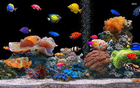 HD Fish Free Desktop Wallpaper Download Free 141409