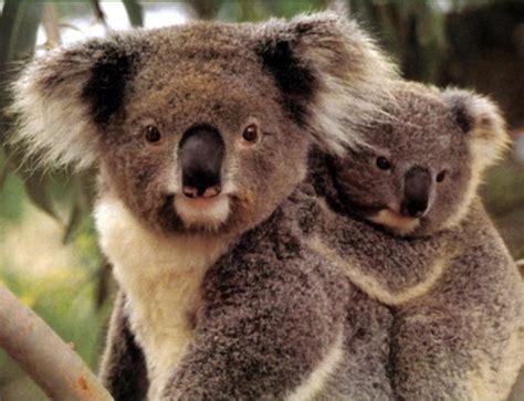 Nature: endangered species