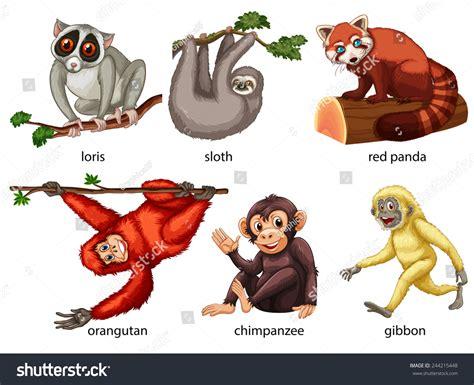 Illustration Different Kind Animals Stock Vector 244215448