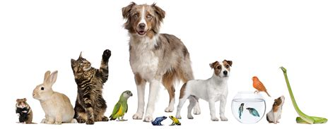 Dog Walking, Pet Sitting & Boarding Services Pet and