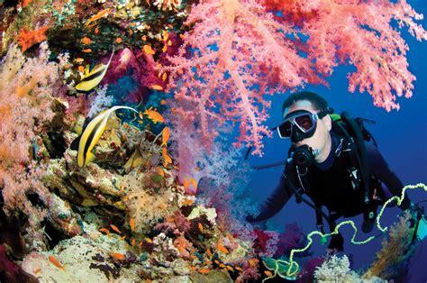"""Free Coral Reef """"Live Dive"""" dalamn"""