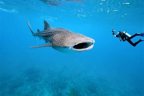 Riviera Maya scuba diving Diversity Diving Scuba