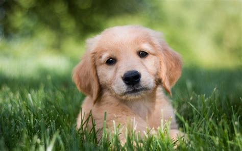 Dog Wallpapers Puppy (34 Wallpapers) HD Wallpapers