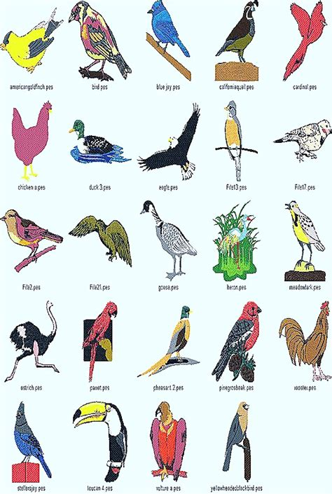Foreign Birds With Name