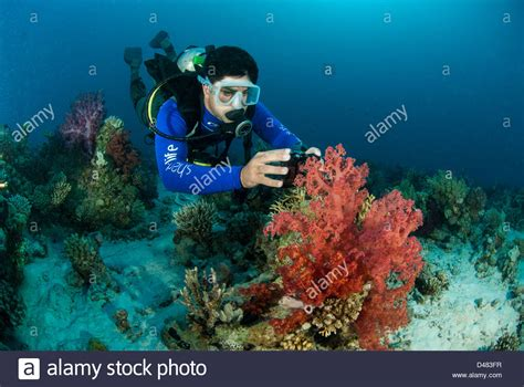Scuba Diving In Egypt Stock Photos & Scuba Diving In Egypt