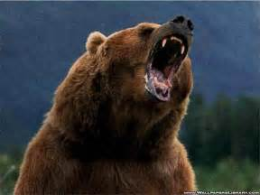 Miracle survivor of grizzly bear attack   Mail Online