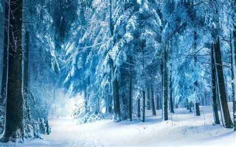 winter forest landscape 4 HD Wallpaper Landscape Wallpapers