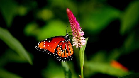 Butterfly nature animal forest color tree hdr ultrahd