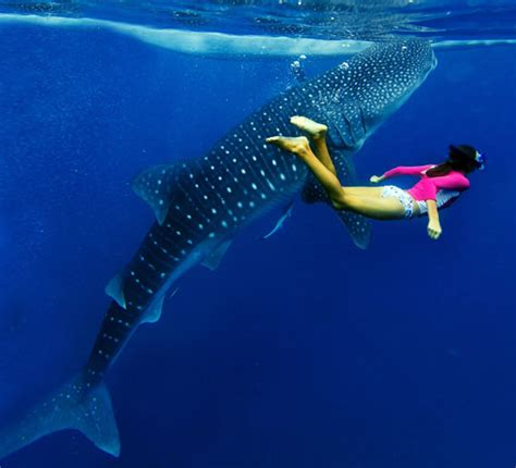 Diving with Whale Sharks Dive The World Creature Features