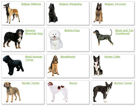 All List Of Different Dogs Breeds: Dog Breeds List With