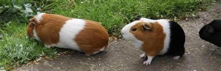 Small Animal Food Nixons