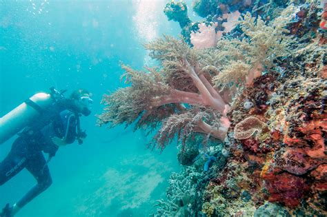 A Coral Wonderland Diving Apo Island Bold Travel